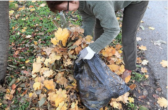 Do a fall clean-up for an elderly neighbor