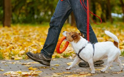 Ask your neighbors if they need help walking their dogs