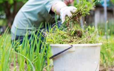 Weed your neighbor's garden