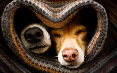 Donate old blankets and towels to an animal shelter